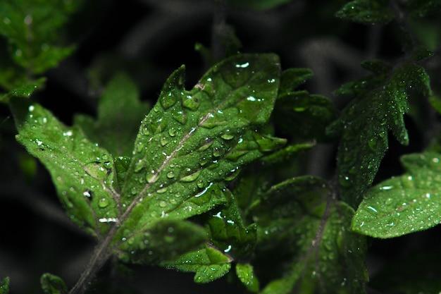 Strzał zbliżenie rosy na mokrych liściach