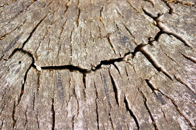 Strzał zbliżenie starego cięcia drewniane drzewo w lesie