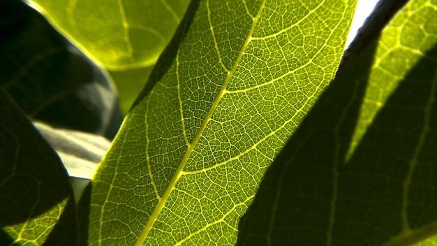 Strzał zbliżenie świeżych zielonych liści tekstury