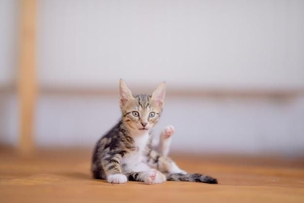 Strzał zbliżenie urocza kotka na niewyraźne tło