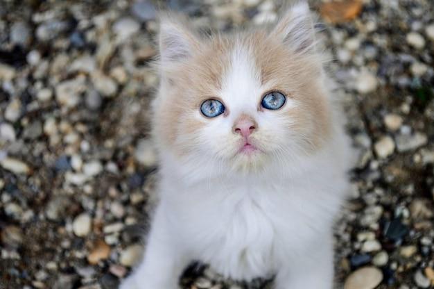 Strzał zbliżenie uroczego kotka siedzącego na kolorowych kamieniach