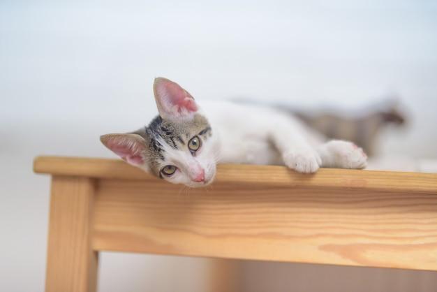 Strzał zbliżenie uroczego małego kota domowego leżącego na stole