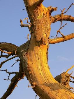 Strzał zbliżenie uszkodzonego pnia drzewa z gołymi gałęziami