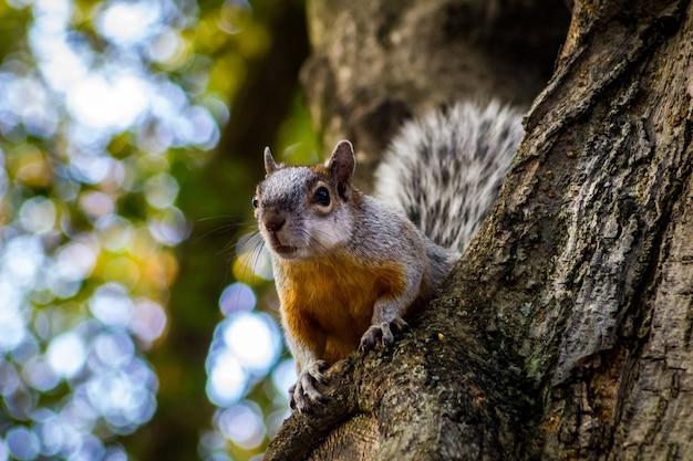 Strzał zbliżenie wiewiórki na drzewie w ciągu dnia
