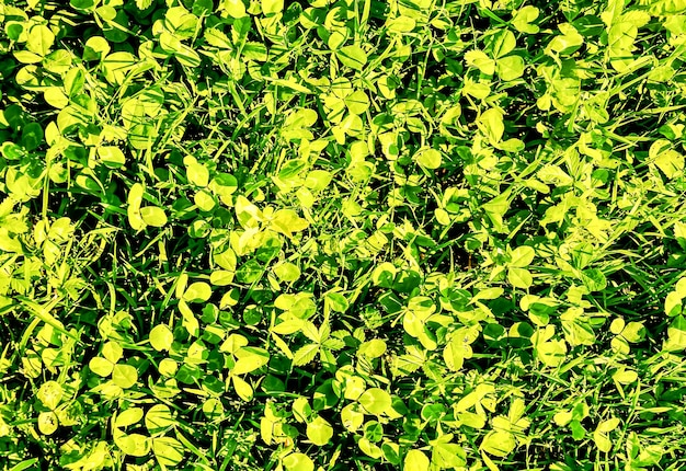 Strzał zbliżenie zielona trawa na wyspach kanaryjskich