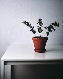 Strzał zbliżenie zielonej rośliny na białym stole w domu