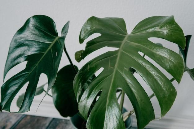 Strzał zbliżenie zielony sztucznej rośliny doniczkowej