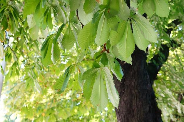 Strzał zbliżenie zielonych liści na drzewie