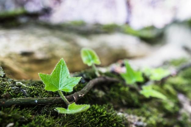 Strzał zbliżenie zielonych liści rośliny w lesie