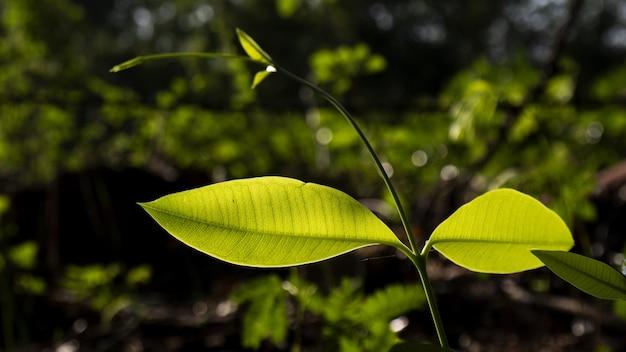 Strzał zbliżenie zielonych liści z tłem bokeh