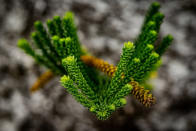Strzał zbliżenie zielonych świeżych liści z niewyraźne
