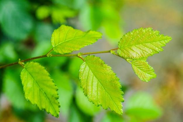 Strzał zbliżenie zielonych świeżych liści