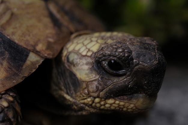 Strzał zbliżenie żółwia