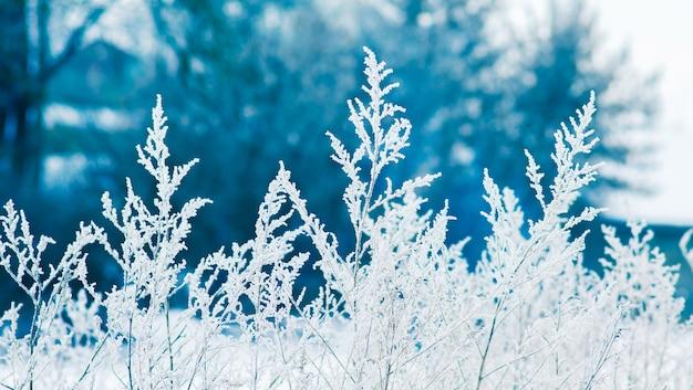 Strzela trawą pokryte szronem na niebieskim tle w słoneczną pogodę