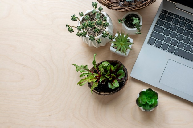 Studium ogrodnictwa, roślin. szkolenia online z ogrodnictwa.
