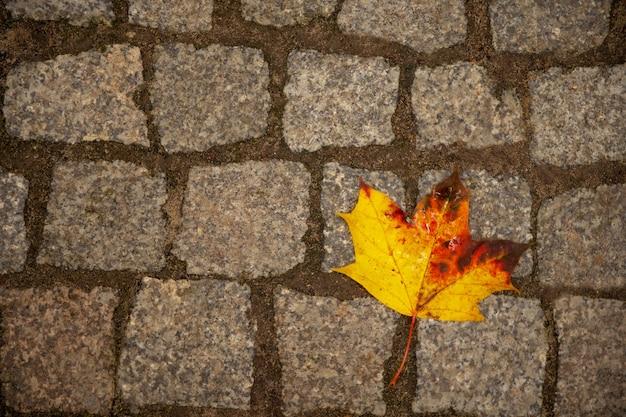 Styl życia. zdjęcie koncepcyjne. jesienny jasny opadły liść leży samotnie na kamiennej ścieżce w parku