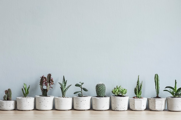 Stylowa i botaniczna kompozycja domowego ogrodu wypełniła wiele roślin w różnych wzorach betonowych doniczek na stole