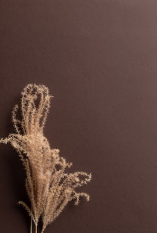 Stylowa jesienna kompozycja z suszoną naturalną trawą pampasową