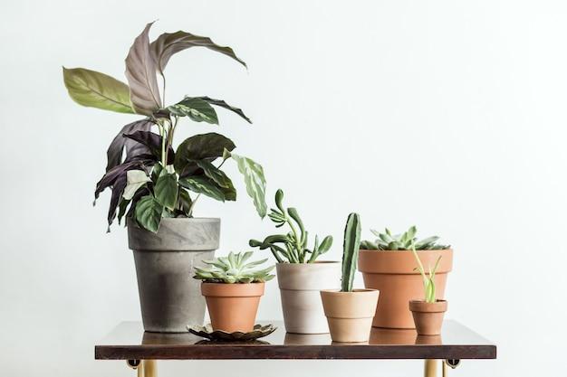 Stylowa kompozycja kreatywnego wystroju wnętrz hipster z roślinami w donicach klasycznych i designerskich