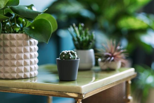Stylowa kompozycja kwiatowa z pięknymi roślinami, kaktusami i sukulentami w designie oraz hipsterskimi doniczkami na marmurowym stoliku kawowym. naturalny salon. zielone ściany. koncepcja ogrodnictwa domu. szablon.