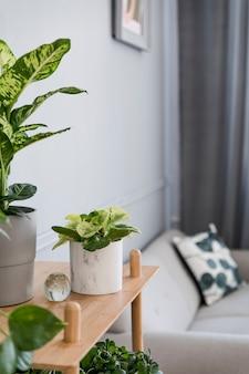 Stylowe i minimalistyczne wnętrze salonu boho z drewnianą półką, szarą sofą, designem i eleganckimi dodatkami, ręcznie robioną makramową półkę na doniczkę. botanika i wystrój domu z dużą ilością roślin.