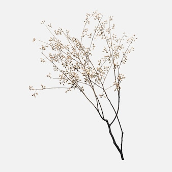 Sucha gałąź kwiatu na złamanej bieli