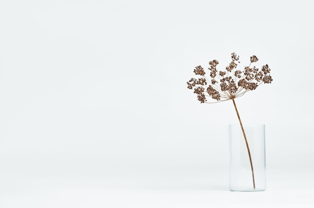 Sucha gałązka koperku w szklance na jasnym tle