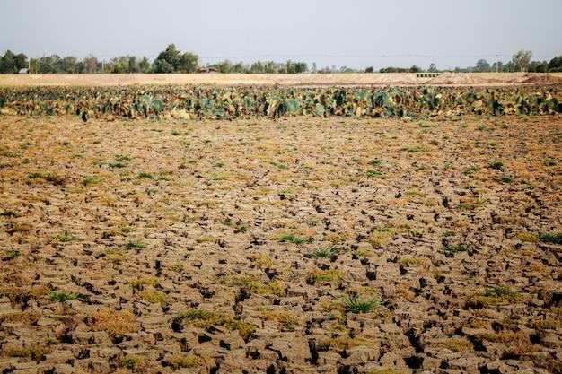 Sucha gleba na wsi.