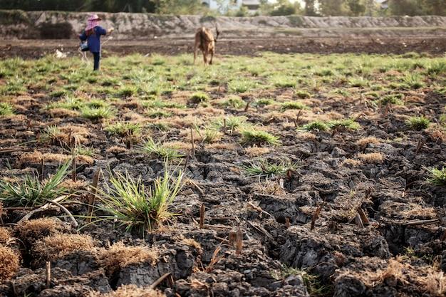 Sucha gleba ze światłem słonecznym.