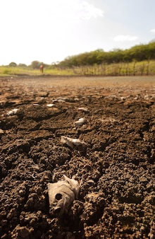 Sucha i popękana ziemia spowodowana suszą w paraiba w brazylii. zmiana klimatu i kryzys wodny.