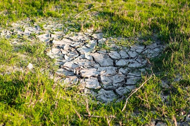 Sucha popękana gleba