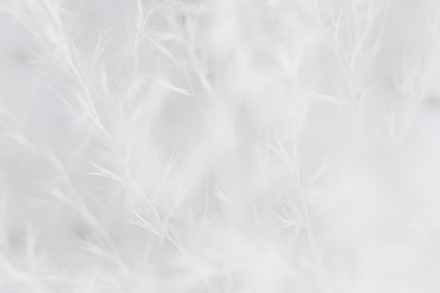 Sucha trawa białe wyblakłe tło