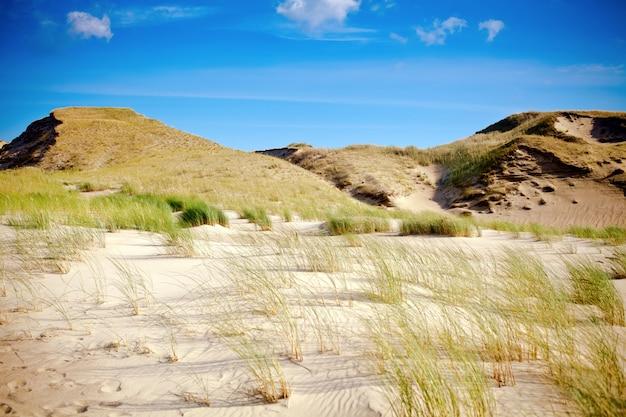 Sucha trawa i piaszczyste wydmy na mierzei kurońskiej
