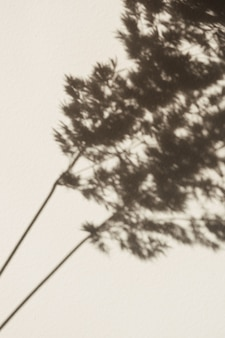 Suche cienie trzciny pampasowej na ścianie. sylwetka w świetle słonecznym