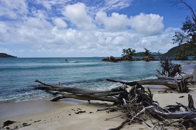 Suche drzewa na piaszczystej plaży na seszelach w afryce.