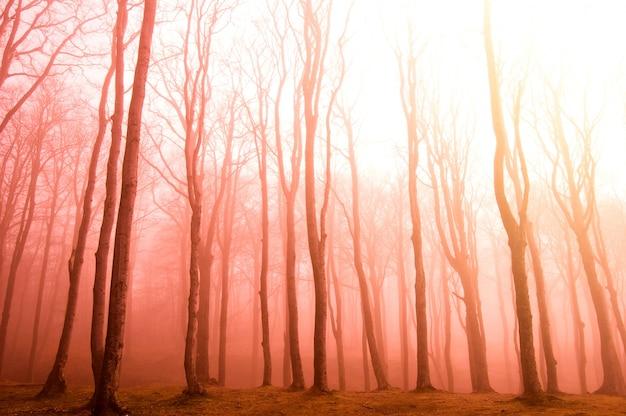 Suche drzewa na zachodzie słońca