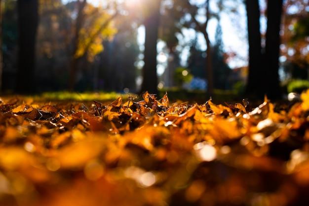 Suche drzewa pozostawia w glebie, stary, jesień koncepcji i ciepło.