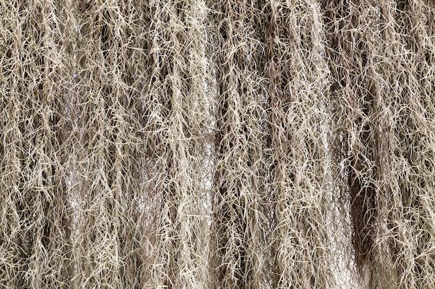 Suche drzewa w tropikalnym lesie na sri lance. atrakcje cejlonu