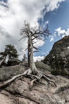 Suche drzewo na kamiennym wzgórzu