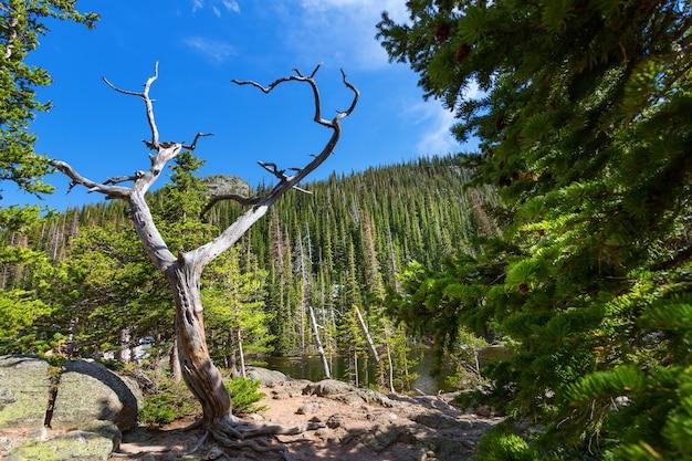 Suche drzewo na tle góry z wiecznie zielonymi lasami
