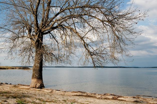 Suche drzewo u podnóża jeziora