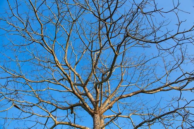 Suche drzewo.