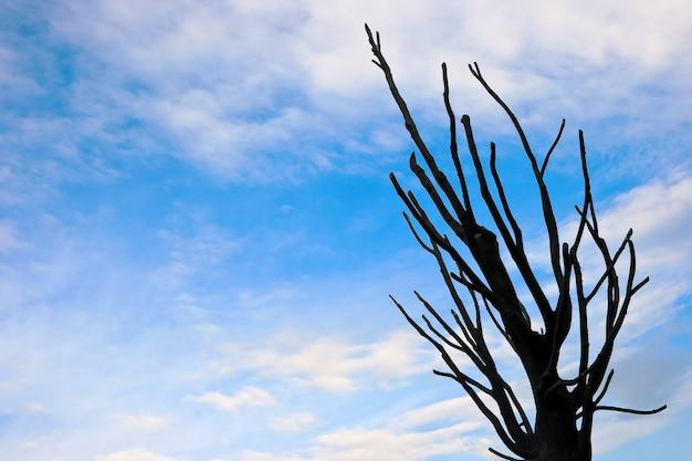 Suche drzewo