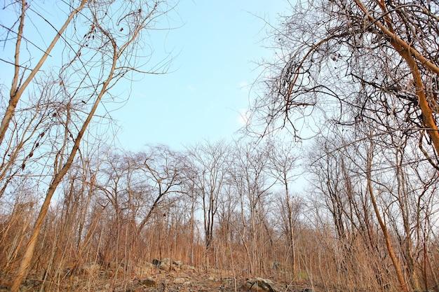Suche gałęzie drzew na tle lasu