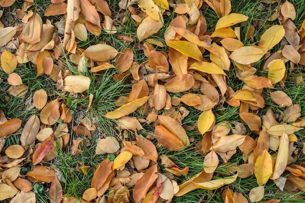 Suche jesienne liście na trawie w zimny październikowy dzień. tekstura. tło.