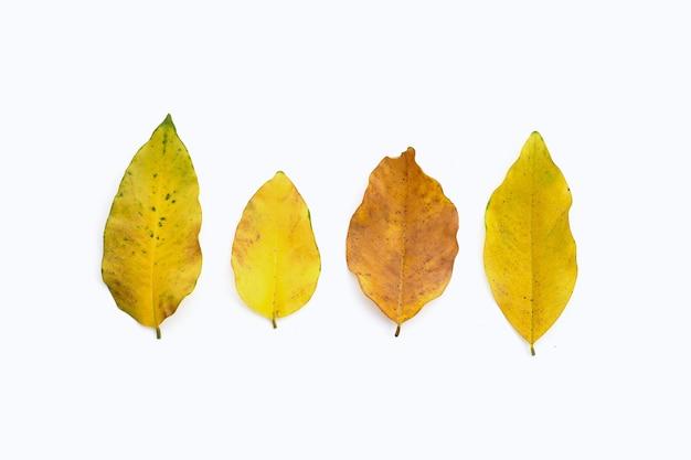Suche liście na białym tle