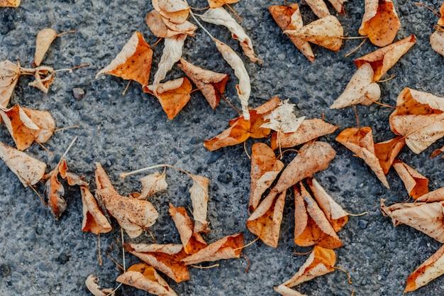 Suche liście na chodniku