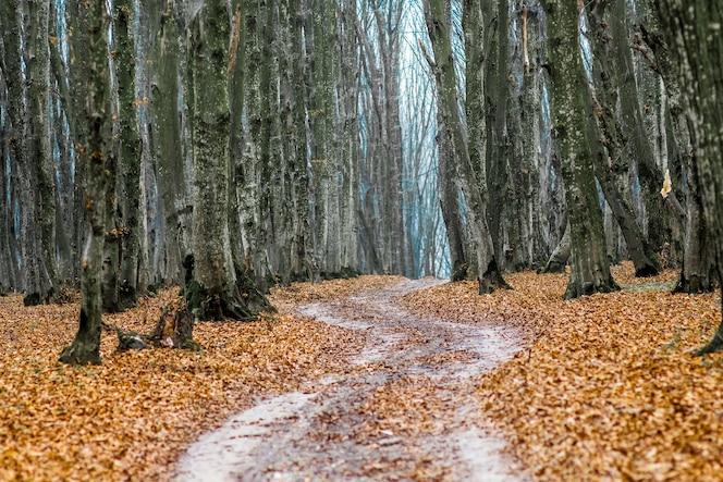 Suche liście na leśnej drodze jesienią