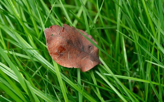 Suche liście na zielonej trawie. trawa z liściem, bliska do projektowania o wysokiej rozdzielczości