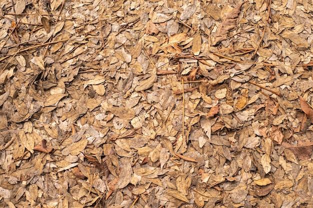 Suche liście na ziemi liście pokrywają piękny wzór w lesie ogrodowym. jesienne liście drzew latem piękne naturalne kolory dla tekstury tła.